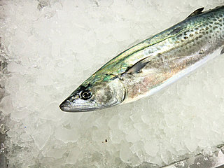 魚へんに春と書いて「鰆(サワラ)」。旬が冬なのはどうして?