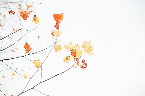 二十四節気「立冬」。木枯らし一号も吹き、樹木が思い思いに色づくころ_画像