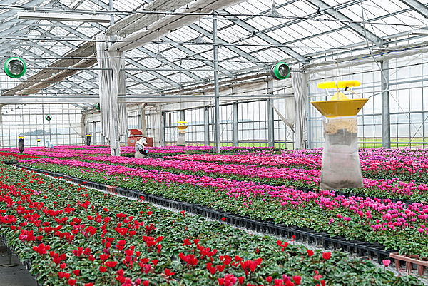 敷地内にあるハウスでは花の苗も栽培中(画像はイメージ)
