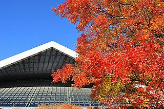 いままさに、紅葉真っ盛りを迎えようとしている駒沢公園!〈紅葉狩り情報│2017〉