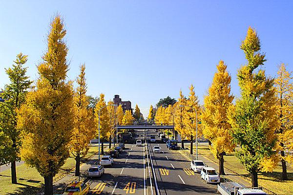 都民の憩いの場。駒沢通りや幹線沿いのイチョウは見事のひとこと!