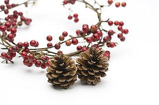 秋の小鳥たちが集まる赤い実のなる木、何の木かご存知ですか?