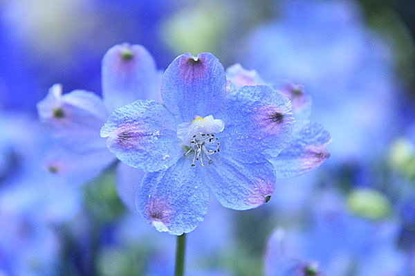 二十四節気「清明(せいめい)」…花言葉になっている花は?