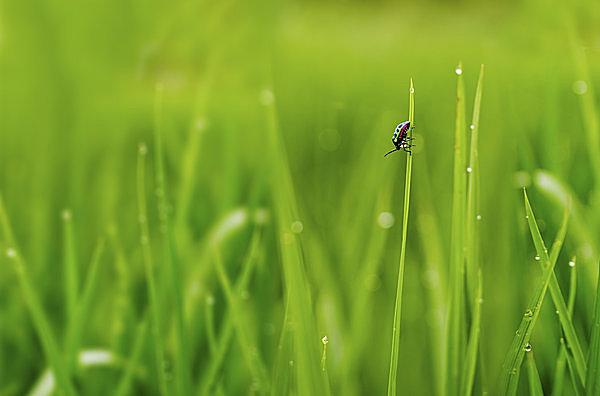 4月20日、二十四節気「穀雨(こくう)」の意味と季節の楽しみ