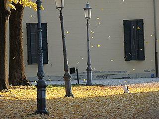 小雪も次候になりました「朔風払葉」北風が木の葉を払う時です