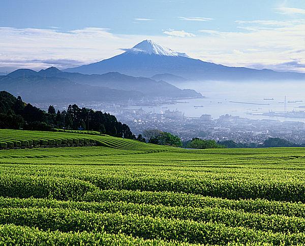 5月2日は夏も近づく「八十八夜(はちじゅうはちや)」…茶に日本の美意識を知る
