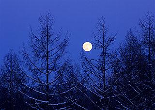月光が革手袋に来て触るるー俳句歳時記を楽しむ
