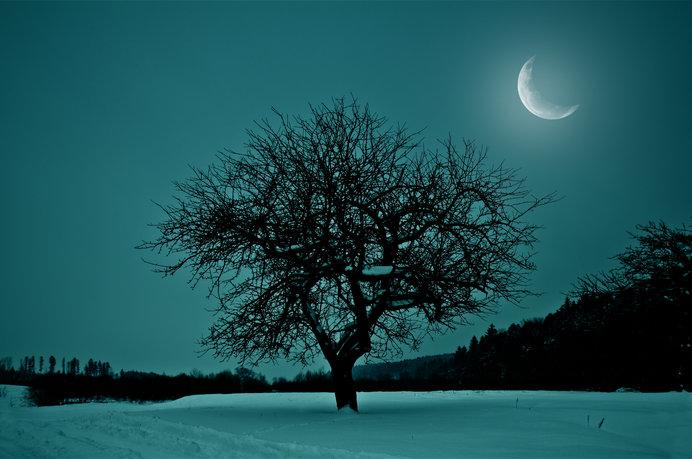 鶡(ミミキジ)も鳴かなくなる冬至前の暗い夜。二十四節気「大雪(たいせつ)」