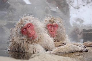 日本の冬はやっぱりコレ!温泉にまつわるウンチクあれこれ