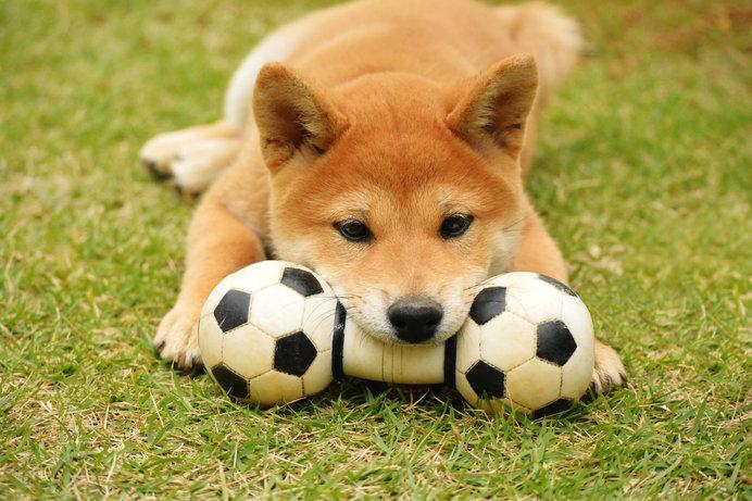 戌年にちなんで「犬」にまつわるアレコレをランキングでご紹介!