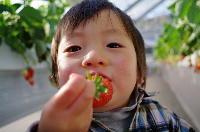 3歳未満は無料! 完熟いちごをたっくさん頬張っちゃお♪ ※画像はイメージ