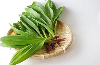 山菜の季節!!北海道特産、話題の「行者にんにく」が、そろそろ出回ります!!