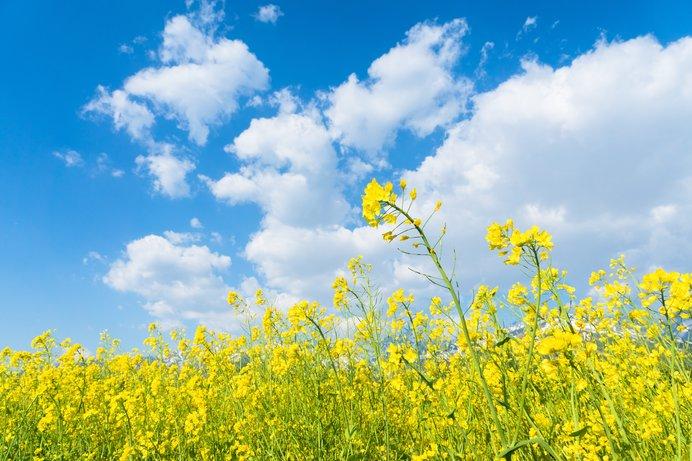梅や菜の花、チューリップ♪早春を楽しむフラワースポット<レジャー特集|関西2018>