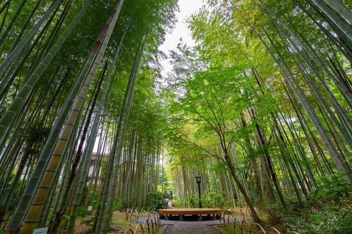 宿からすぐ、「竹林の小径」は人気の散策コース
