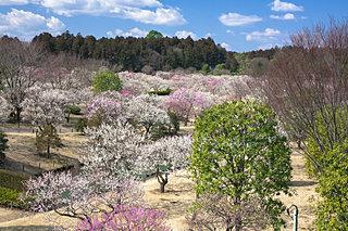 観梅シーズン到来!水戸の「偕楽園」「弘道館」で梅まつりへ!〈レジャー特集|2018〉