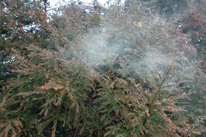 今年の花粉飛散状況は前シーズンより多め!? 早め早めの対策を!