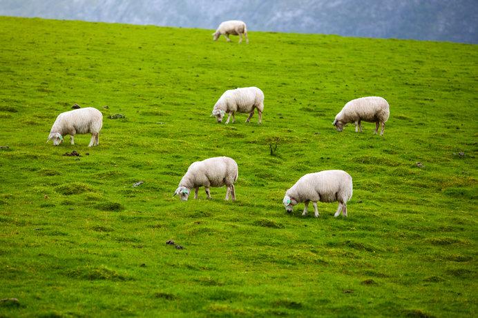 牧師には羊飼いの意味があります