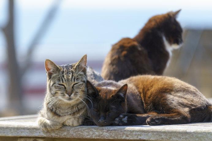 2月22日は「猫の日」。今、奄美群島がネコを巡ってゆれています ...