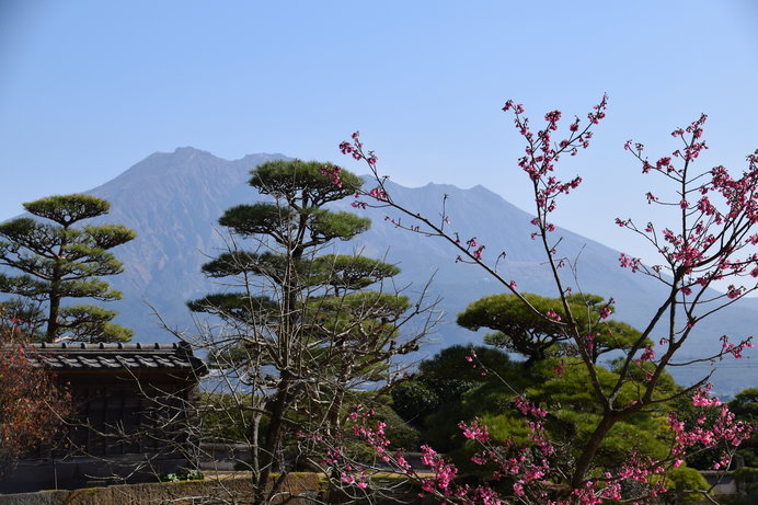 仙巌園から見る桜島