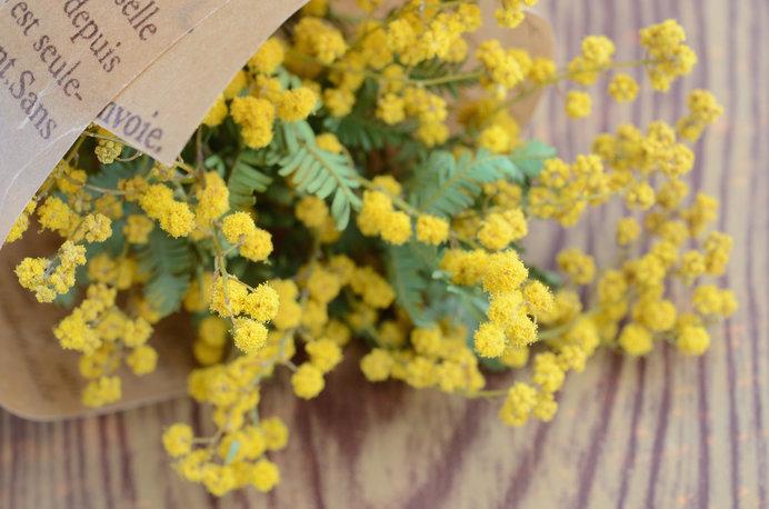 3月8日はミモザの日。男性から女性へ花束を贈る日