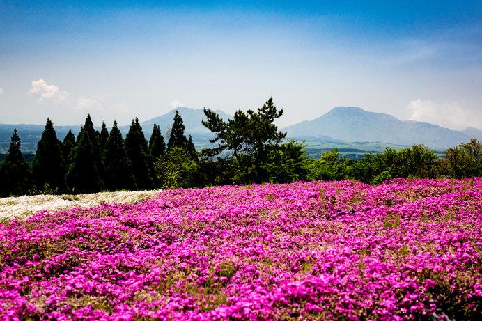 高原の爽やかな風と、のどかな景色に癒されます