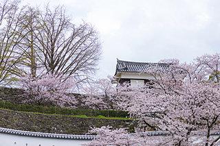 さあ桜の開花はまもなくです!〈桜の名所特集|鹿児島・大分・宮崎・長崎〉