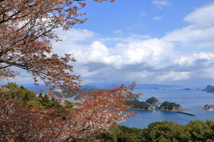 宮崎県日南市の桜