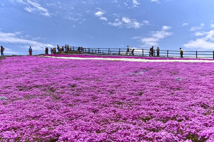 ロープウェイを降りるとそこは、天空の花回廊