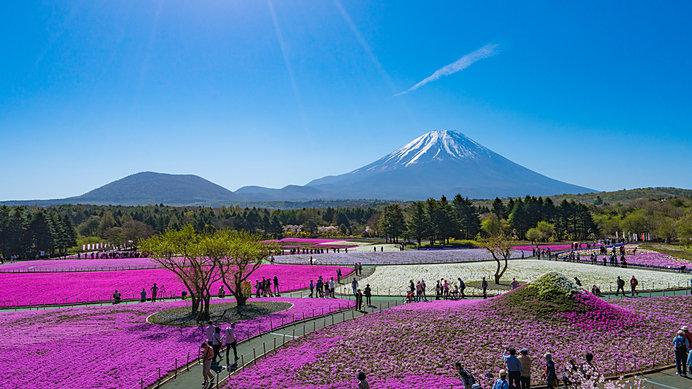 芝桜の富士山も! フォトスポットがあちこちに