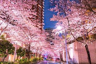 春の宵を満喫しよう!東京の夜桜ライトアップ<桜の名所特集2018|東京>