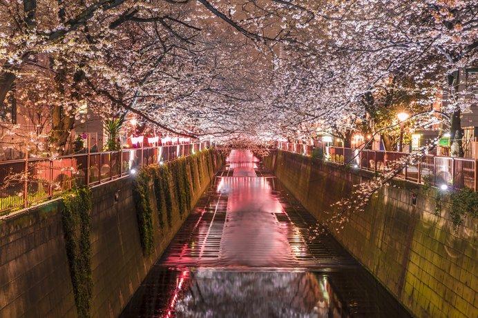 春の宵を満喫しよう!東京の夜桜...