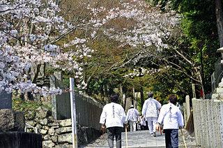 さあ桜の開花はまもなくです!〈桜の名所特集|徳島・高知・愛媛・香川〉