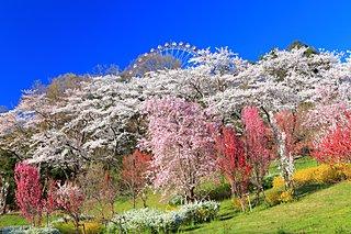 今年の桜に逢いに行こう!南関東のおすすめスポット<桜の名所特集2018|関東>