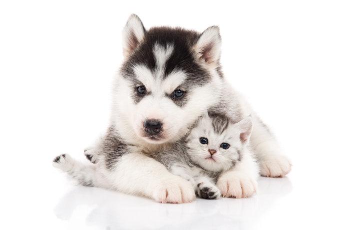 飼い主の終活「ペット信託」とは?