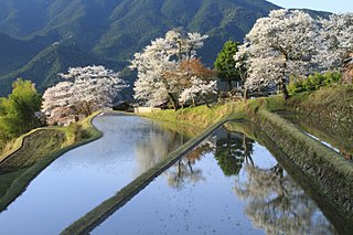 今年の桜に逢いに行こう!東海地方のおすすめスポット<桜の名所特集2018|東日本>