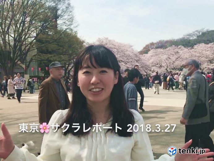 満開!!東京サクラレポート
