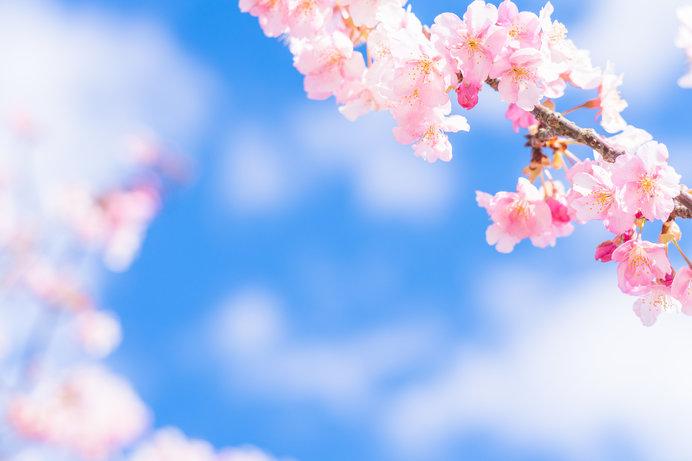 春爛漫の4月「卯月」。満開の花時が訪れる桜前線北上中!
