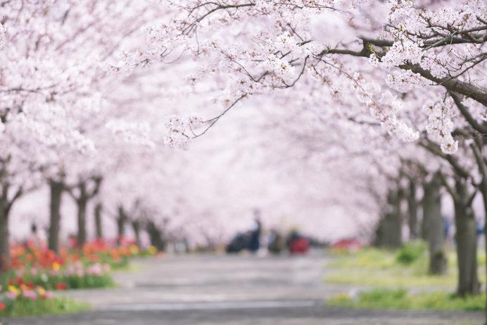 卯の花の「卯」か、うさぎの「卯」か。「植月」か…卯月の名の由来