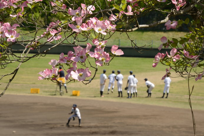 桜ほど騒がれず、静かに確実に咲く花水木