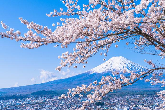 桜と富士山。こんな景色が見えたら最高ですね!