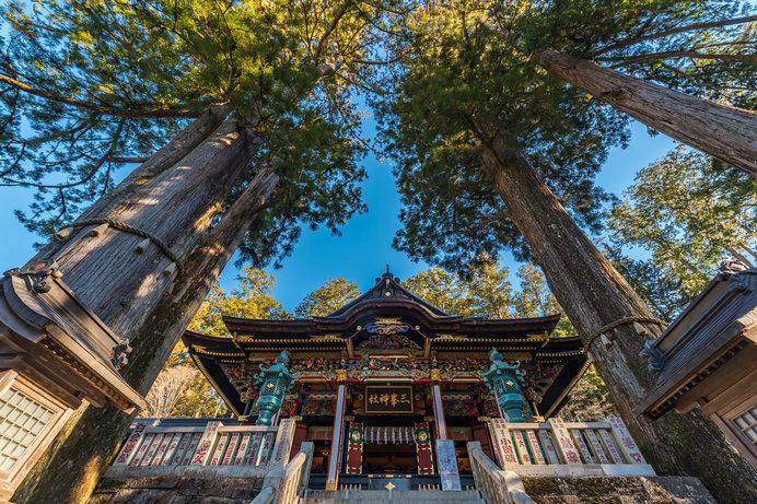 拝殿前の御神木には強力なパワーが宿っているのだとか