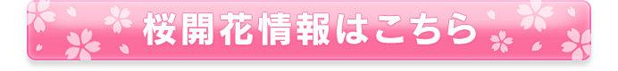 """知っているようで知らない、""""染井吉野""""と""""八重桜""""の違い_画像"""