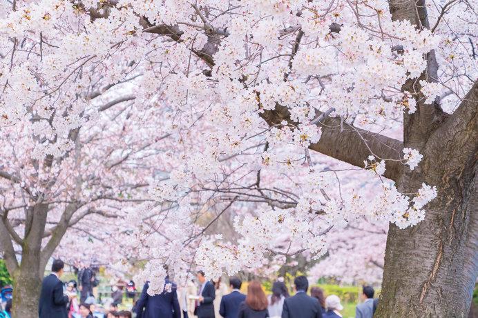 桜前線 北上!!東北の桜はこれから!!<桜の名所特集2018/東北>