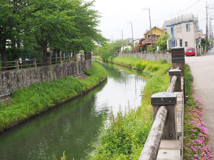 荷風の散歩道:市川市の真間川