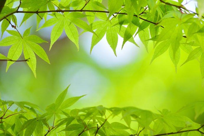 風薫る「皐月」の到来!新緑が輝く光の季節