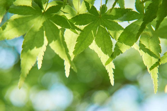 気持ちのよい季節。気が滅入ったら新緑を眺めに散歩に出かけてみましょう