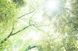 日本は世界屈指の森林国!?日本の森林で五感を開く森林セラピーのススメ