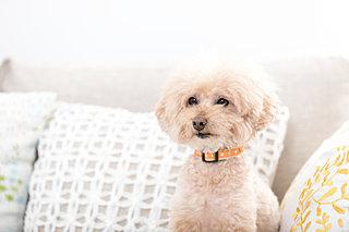 室内犬の冷房……。気温が高くなるこれから、どうしたらいい?