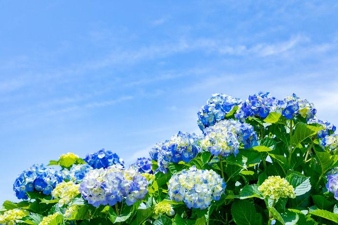 初夏の花を観に出かけよう!〈レジャー特集|【東京編】2018〉