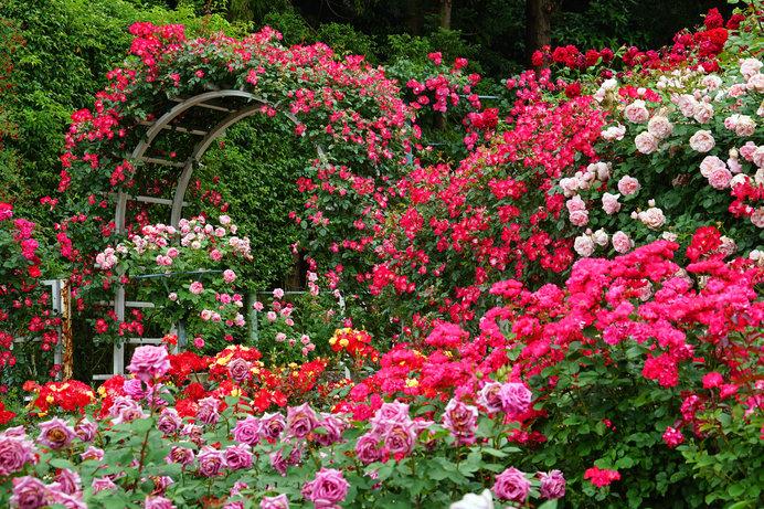 世界平和への祈りを込めたバラ庭園